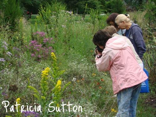 (1)meadow w-sig