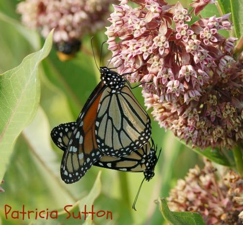 001 - Monarchs w-sig