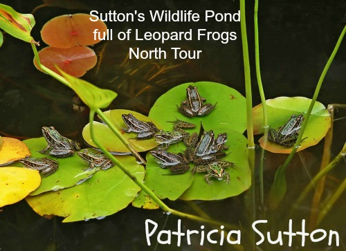 Sutton Pond-August 2010 Tour-w-sig.jpg