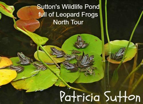 Sutton Pond-August 2010 Tour-w-sig.jpg