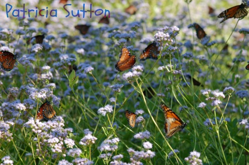 November Butterfly Gardens In South Texas